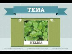 Beneficios, nutrientes y propiedades de la melisa. Más información en: http://www.remediocaseronatural.com/comidas-sanas-beneficios-melisa.htm