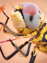 Macro photography tips (& cool insect photos!)