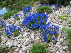 Outdoor Gardens, Stepping Stones, Home And Garden, Outdoor Decor, Flowers, Plants, Gardening, Google, Gardens