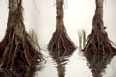 Completely built, inside, swamp scene DIY. That's Mylar for the water. So mind blowingly cool!