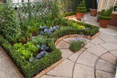 Veg garden- beans, tomato, rainbow chard, lettuce ...