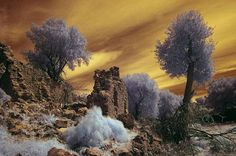 near-infrared-photo-12