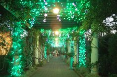 The West Pergola is a favorite place for photos during Holidays at the Garden 2014 at Daniel Stowe Botanical Garden.