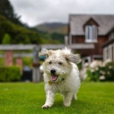 Furgus the dog enjoys all the space to run around! Run Around, Homestead, New Zealand, Cute Animals, Lifestyle, Space, Dogs, Pretty Animals, Floor Space