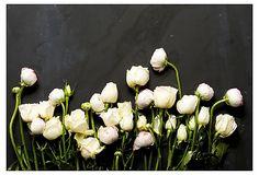 Mason Stefl, Floral Study V on OneKingsLane.com