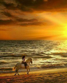 Best Ideas For Hintergrundbilder Nature Tiere Cute Horses, Pretty Horses, Horse Love, Beautiful Horses, Horse Girl Photography, Nature Photography, Running On The Beach, Beach Landscape, Horse Pictures