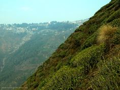 It is eminent that some tea fields in Darjeeling are more at a 45 degree angle as shown in the photo. A rather amusing Robert Fortune story Darjeeling Tea, Tea Plant, Tea Blog, Loose Leaf Tea, Tea Gardens, Tea Cups, Around The Worlds, Journey, Degree Angle