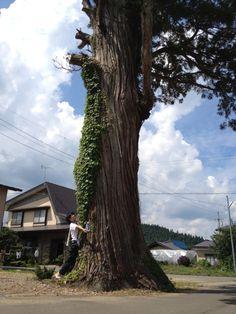 立派な杉の木!!これから鎌澤大仏を見に☆ Photo by nanahonjo