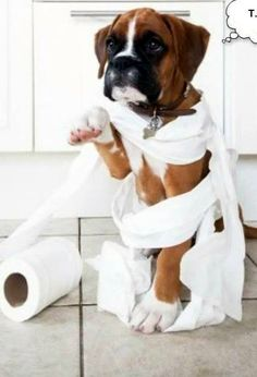 boxer puppies are too cute! Boxer Puppies, Cute Puppies, Cute Dogs, Dogs And Puppies, Doggies, Boxer Breed, Boxer And Baby, Boxer Love, I Love Dogs