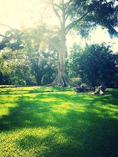 Beautiful Garden in Poway California.