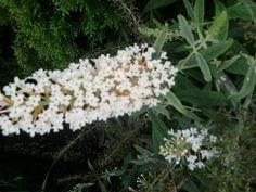 Piękny Kwiat prosto z ogródkaa