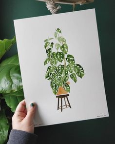 received some beautiful watercolour paper this week! Can't wait to try them 😊 let me know what's your favourite plant with crazy foliage! Watercolor Kit, Watercolor Plants, Watercolor Artwork, Watercolor Illustration, Floral Watercolor, Cactus Painting, Plant Painting, Plant Drawing, Painting Tips