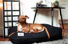 Box Pillow Dog Bed