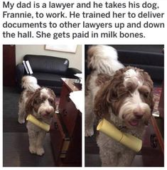 33 Hilarious Animal Memes That Will Hurt Your Tummy With Laughter Dog Quotes Funny, Funny Animal Memes, Dog Memes, Hilarious Sayings, 9gag Funny, Hilarious Memes, Memes Humor, Animal Quotes, Funny Signs