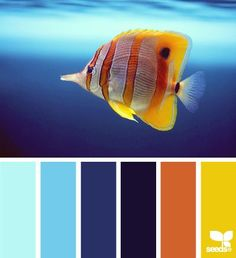 Outdoor Oasis Color Tip: This color scheme gives you a little bit of everything. It can be pops of color or you can choose a dominate warm or cool palette! A great way to give your outdoor space a tropical feel!