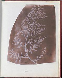 William Henry Fox Talbot  (British, 1800–1877), Wrack, 1839, Photogenic drawing, 22 x 17.5 cm (8 11/16 x 6 7/8 in), irregularly trimmed