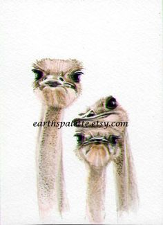 Watercolor ostrich painting 5x7african animal by Earthspalette, $45.00
