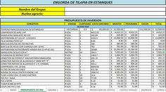 Proyecto Gratis de Engorda de Tilapia en Estanques FAPPA-PROMETE 2015   Proyectos Agropecuarios