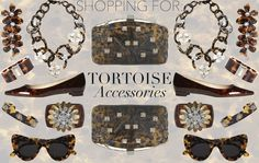 Shopping For: Tortoise Accessories