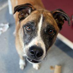Paws - SPCA of Texas (McKinney)