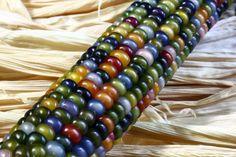 jewel corn - Google 検索