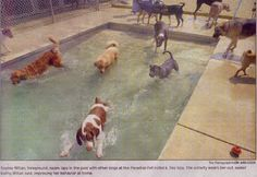 I wanna work there! Dog Swimming Pools, Pet Resort, Dog Daycare, Daycare Ideas, Day Camp, Unique Hotels, Cat Boarding, Catio, Animal House