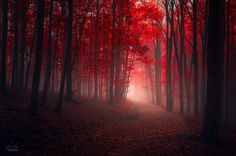 "~ Starobylá Melodie ~  (Ancient Melody)  ""Observe the wonders as they occur around you. Don't claim them. Feel the artistry moving through and be silent.""  By Janek Sedlar Quote by: Rumi Quote provided by: CZ"