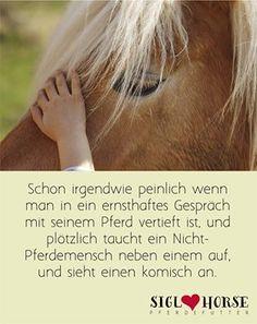 Ist doch normal sich ernsthaft mit seinem Pferd zu unterhalten, oder? ;-) #pferdehumor #pferde