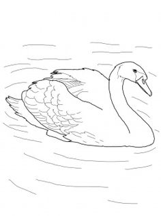 Mute Swan In A Pond Coloring Page From Swans Category Select 28148 Printable Crafts Of Cartoons Nature Animals Bible And Many More