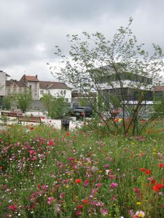 © Green Concept - Renaud Ducher - Le Chambon-Feugerolles - prairie fleurie