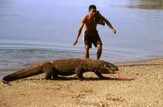 Dragones de Komodo,