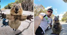 Adorable moment a quokka leaps towards a tourist's camera - before posing for a selfie - 9GAG