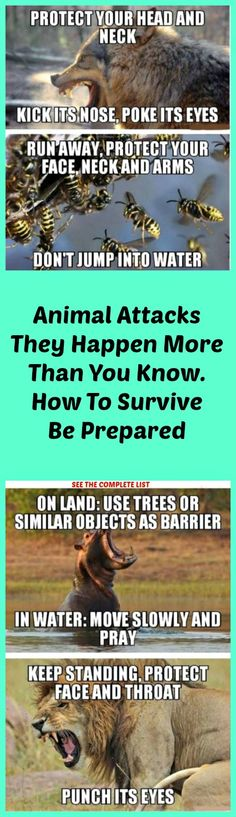 How To Survive Different Animal Attacks See All >> http://omgshots.com/2000-when-animals-attack-without-warning-25-omg-pics.html