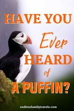 As many of you may remember when we began planning our trip to Iceland I asked Payton to make a list of the things that she wanted to do the most during our stay. Number 3 on her list was to see the puffins! My first thought was – what exactly is a puffin Winter Family Vacations, Best Family Vacation Spots, Family Travel, Summer Vacations, International Travel Checklist, Travel Tips, Travel Abroad, Travel Ideas, Travel Inspiration