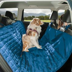 Dog car seat covers keep your car clean from dogs, kids, and messy jobs. Our dog seat covers are waterproof, stain resistant, and backed by a Lifetime Warranty. Cute Little Animals, Cute Funny Animals, Dog Hammock For Car, Dog Seat Covers, Baby Animals Pictures, Dog Car Seats, Cute Dogs And Puppies, Fluffy Puppies, Doggies