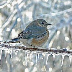 Beautiful Bird on Ice Covered Tree