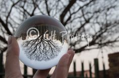 ball, bare, tree, branch, cold temperature, creative, Creativity, crystal, Crystal ball, day, focus on foreground, holding, Nature, outdoors, person, personal perspective, season, Tranquility, Tree, Winter, Tree of Life treetops, crystal clear, close-up, crystalball