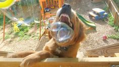 Bubbles!! and Puppies!!!! awesome combo