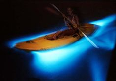Bioluminescent Bay in Puerto Rico and Luminous or Glistening Lagoon in Montego Bay, Jamaica Jamaica Tours, Jamaica Resorts, Jamaica Vacation, Jamaica Travel, All Inclusive Resorts, Vacation Spots, Falmouth Jamaica, Jamaica Excursions, Vacation Ideas