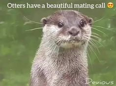#otters, #beautiful, #lol