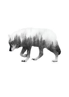 Forest wolf B&W, julisteet