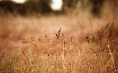 wallpapers free grass