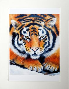 Tiger Giclee Print- A4 Quality Mounted Giclee Print of a Tiger - by Artist Suzie Nichols, art, painting - pinned by pin4etsy.com