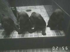 Daschund, Pan & sis first shower