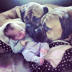 Love and mastiffs. I will probably have mastiffs for the rest of my life