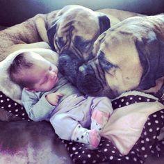 Love and mastiffs