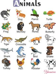 Animals Learning English For Kids, English Lessons For Kids, Kids English, English Language Learning, English Verbs, Learn English Grammar, Learn English Words, English Resources, English Activities