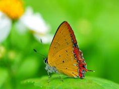 Elegante mariposa posada en una hoja