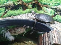Bildergebnis für schildkrötenteiche