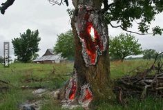 Tree was struck by lightning. Direct hit. Oklahoma USA.